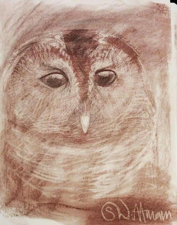 Owl by StefanWittman
