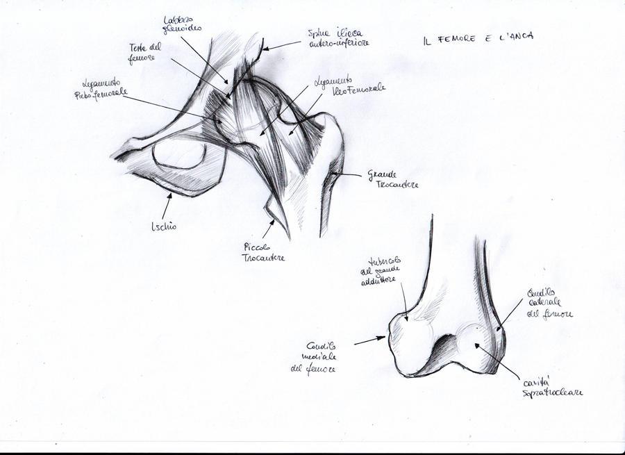 Anatomy Study - 8
