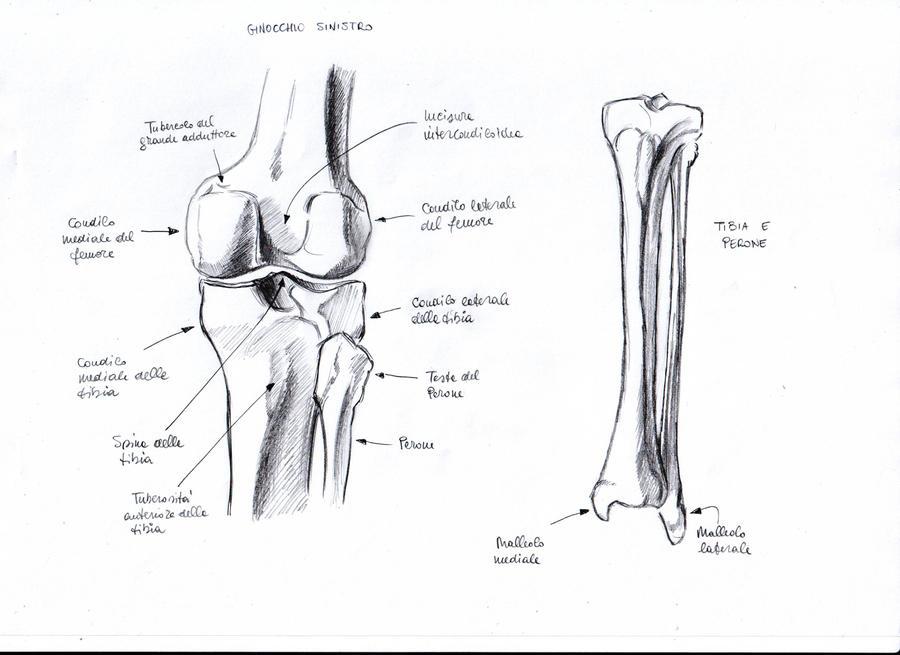 Anatomy Study - 9
