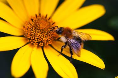 Bee by pilwe