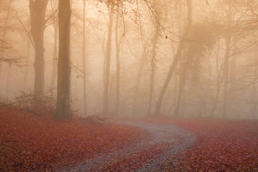 Red Leaf Road