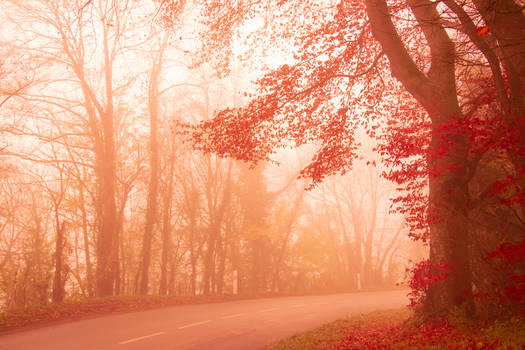 Fall is lit