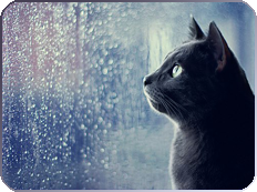 cat n rain by KIngBases