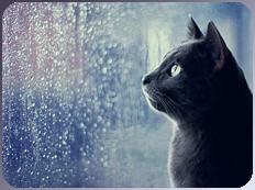 cat n rain by KIngBases