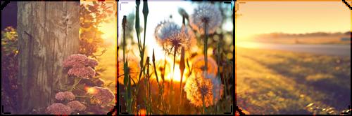 sunrise flowers -decor- by KIngBases