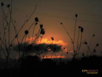 LAST LIGHT by epsdesign