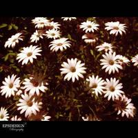 SPRING OUTSIDE by epsdesign