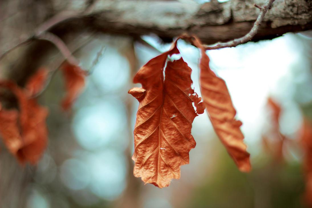 Leaf by Keiji22