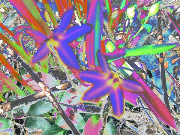 Weird Tye Dye Flowers By Jacobsgrl71 On Deviantart