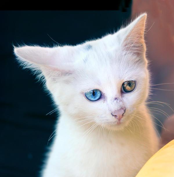 Kitten 2 by floflo