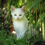 In the garden's jungle