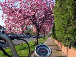 Pink Road by Sableyes