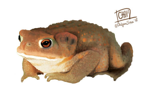 8 of 10: Common toad [ Bufo bufo ]