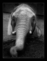 The Elephant by erra