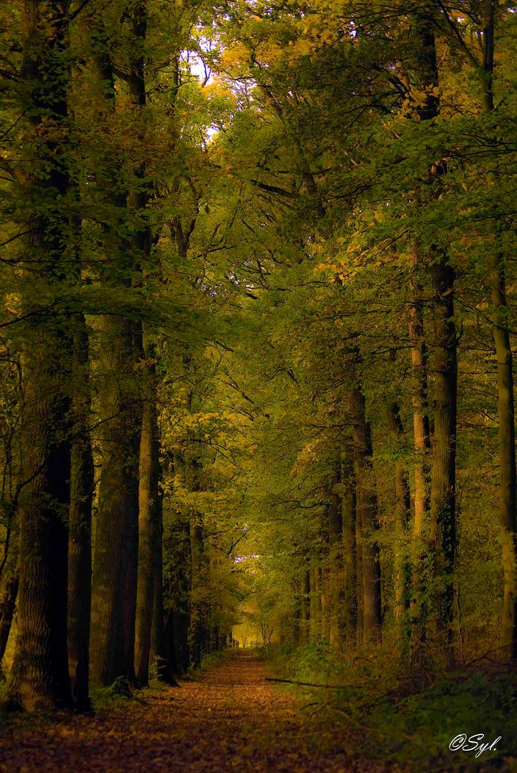 Autumn by WALKING-GIRL