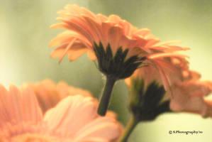 Softness by WALKING-GIRL