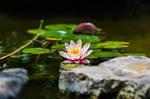 Austin, TX - Zilker Botanical Garden