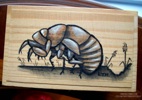 Cicada Curiosity Collection Box SOLD
