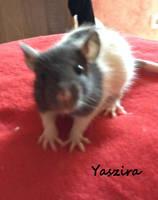 Yaszira