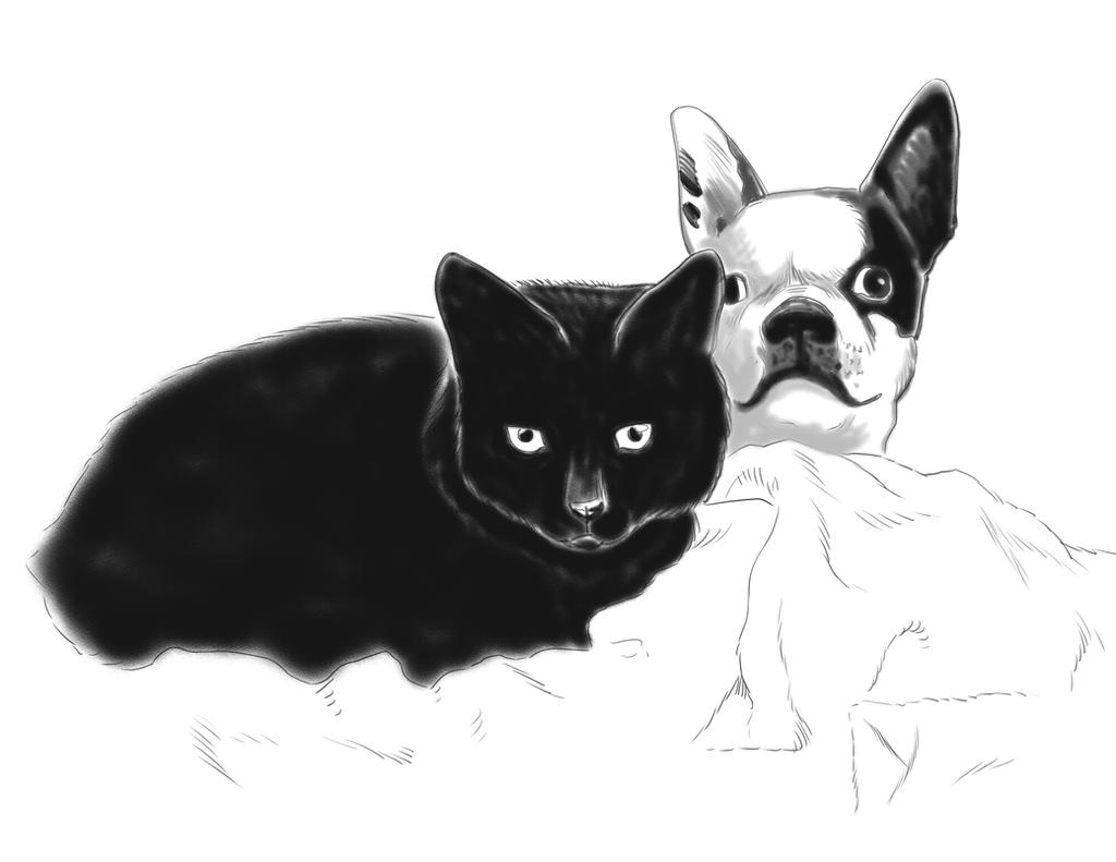 boston terrier and cats cat and boston terrier by amberchrome on deviantart 6168