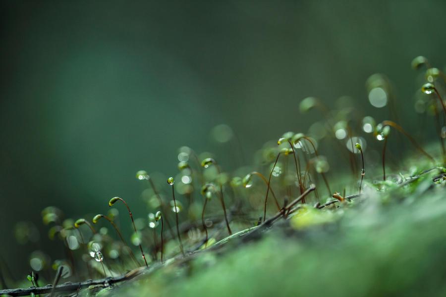 Tiny World by abenham