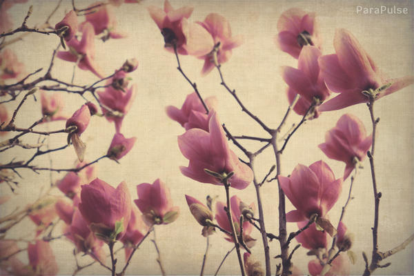 spring_flowers_fading_by_Parapulse