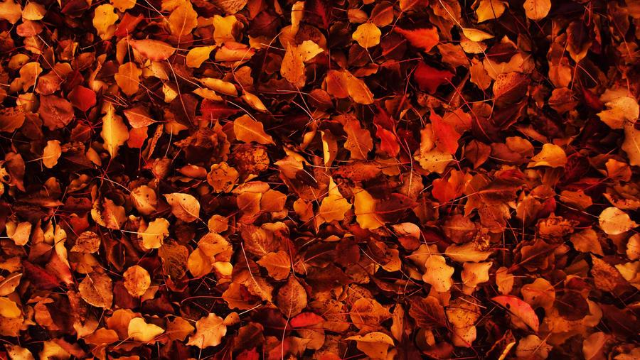 autumn wallpaper by sahist on deviantart