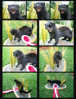 .:Black Mink:. by Knuxtiger4