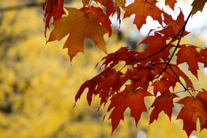fall colours by minamiko