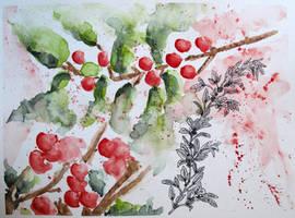 Mooseberry (Shepherdia Canadensis) by minamiko