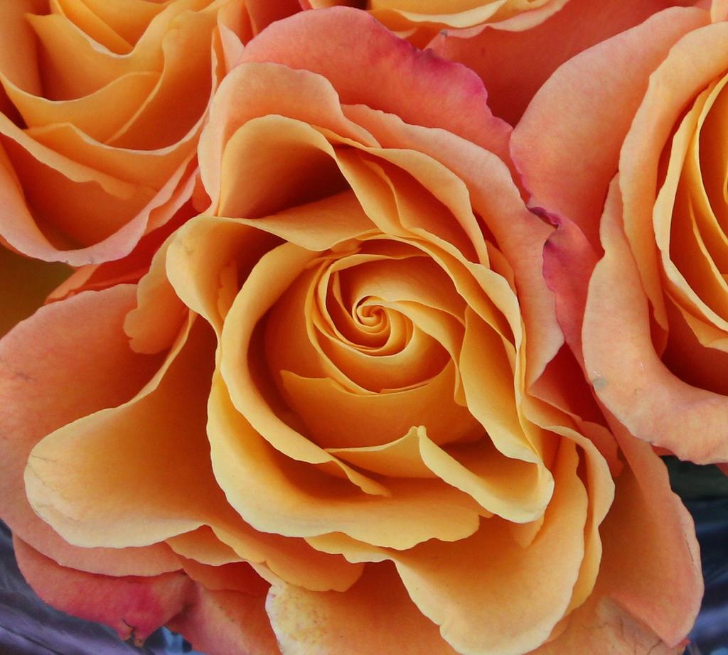 roselicious by minamiko
