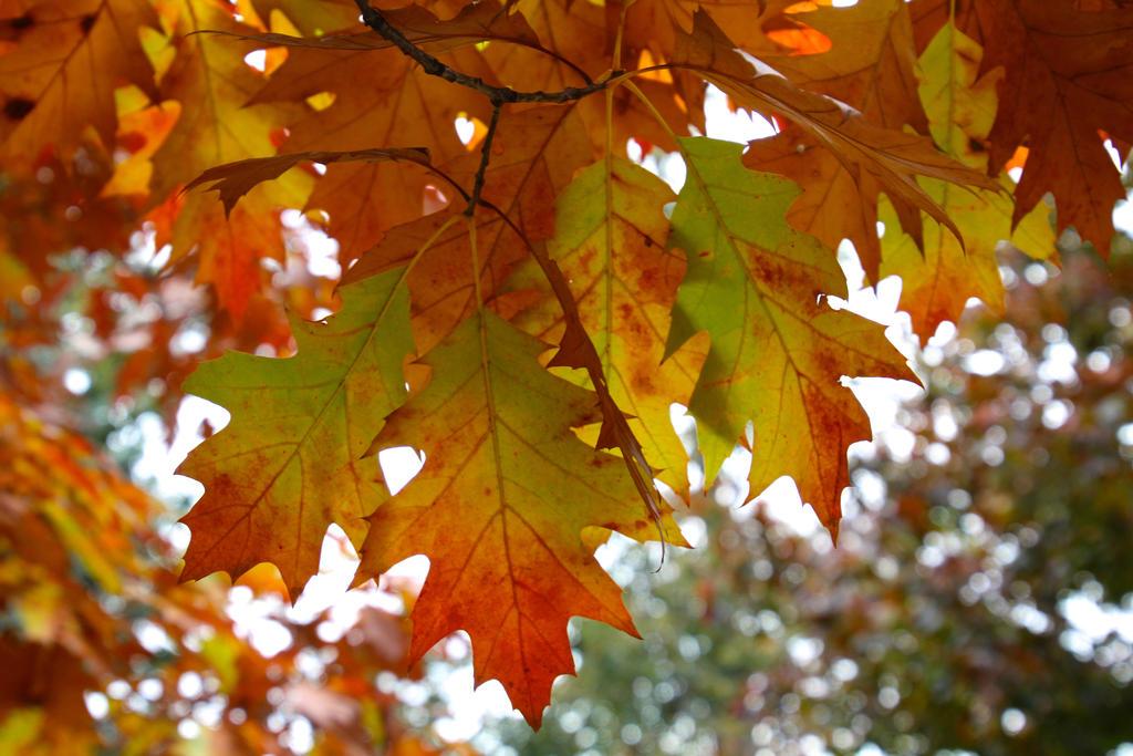 oak tree by minamiko
