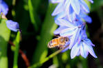 honeybees are back!