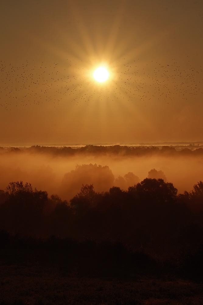 mist_of_dawn_by_zoldszorny-d309xu9.jpg