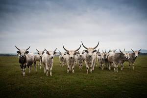 Meet the herd by zoldszorny