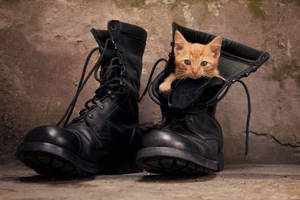 Puss in boots by zoldszorny