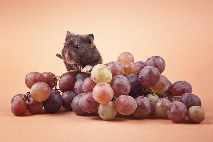 grapes by zoldszorny