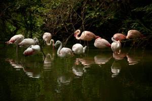 Magic pond by zoldszorny