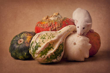 Pile of gourds by zoldszorny