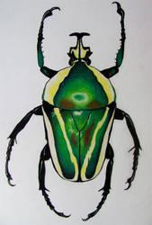 Emerald Fruit Chafer Beetle by baretoedgirl