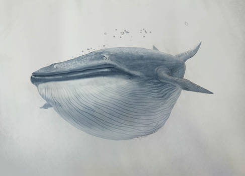 A lone whale