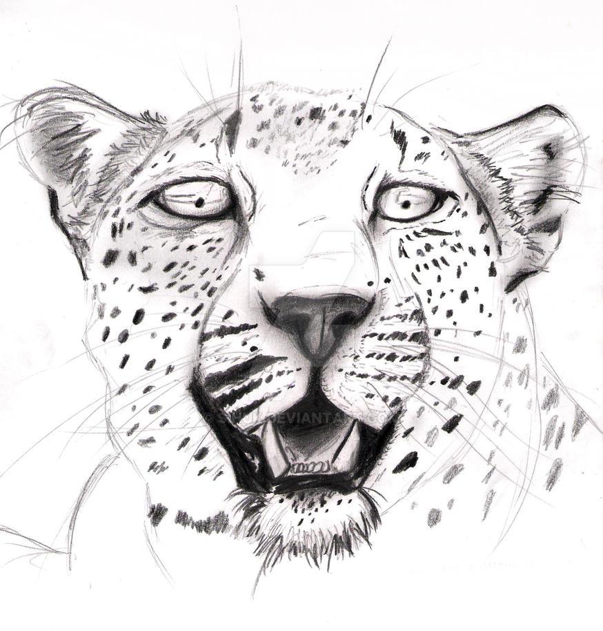 Leopard by Sihuk