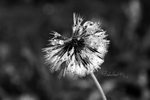Rain Flower.
