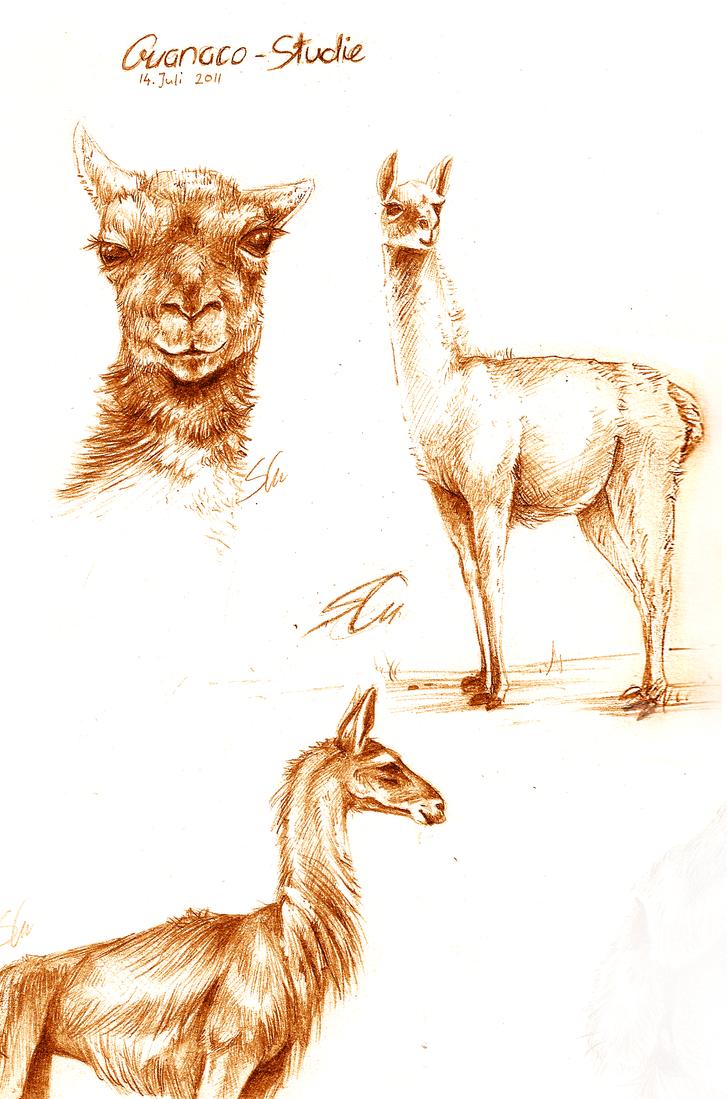 Guanaco Study by Feyrah
