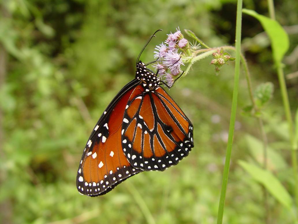 Butterfly by riktorsashen
