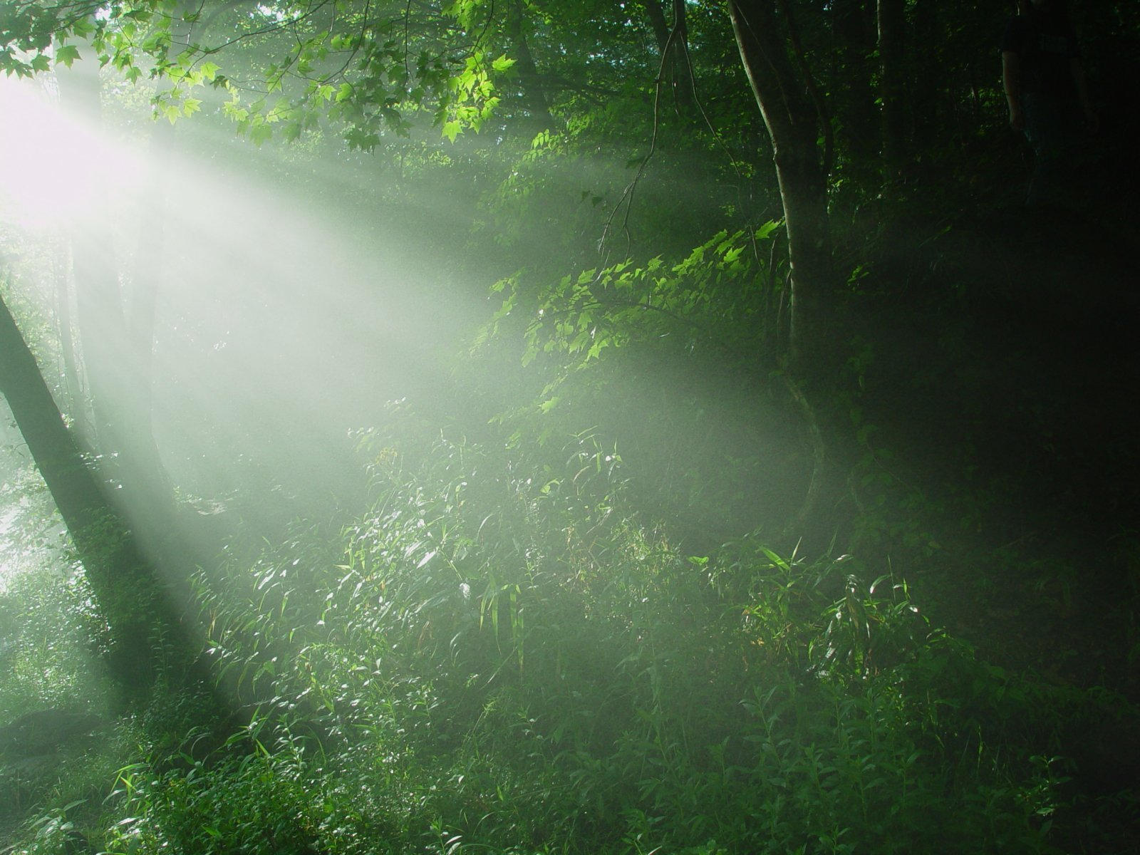 The Magic Forest by riktorsashen