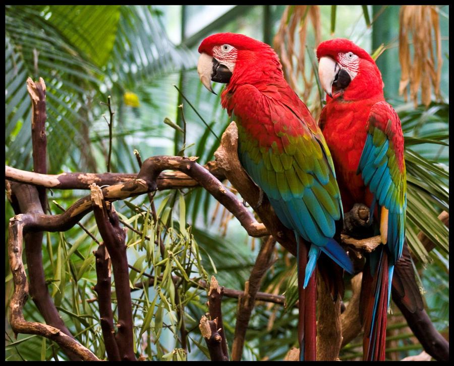 One bird two bird by Roland3791