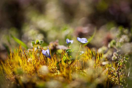 Spring moss world