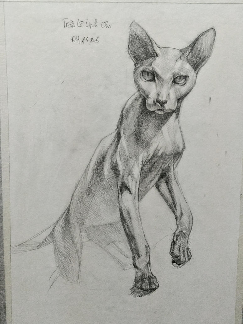 Sphynx Cat by RemexHiro