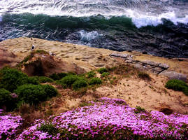 Flowers and Sea by rocamiadesign